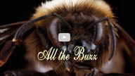 All the Buzz film